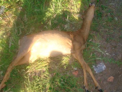 bambi bis
