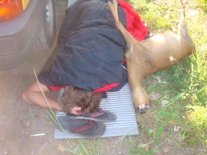 bambi blog